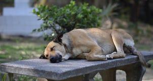 собака спать на скамейке в парке стоковое фото rf