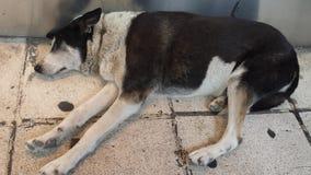 собака спать на улице стоковое изображение