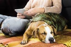 Собака спать с читать человека Стоковое фото RF