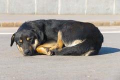 Собака спать Стоковое Изображение