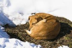 Собака спать Стоковые Фотографии RF