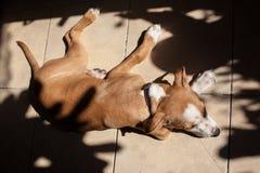 Собака спит на плитке Стоковое Изображение RF