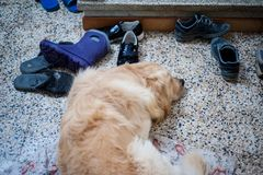 Собака спит на поле Стоковые Фото