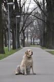 собака старая Стоковое Изображение