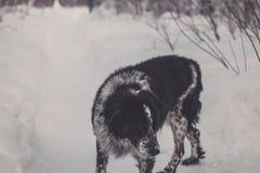 собака старая Стоковое фото RF