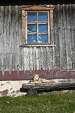 собака стенда Стоковая Фотография