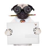 Собака столба доставки почты Стоковые Изображения RF