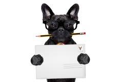 Собака столба доставки почты Стоковые Фотографии RF