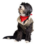 Собака страны Стоковое Фото