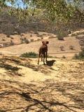 Собака страны Стоковое Изображение