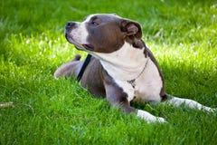 собака счастливая стоковое изображение rf