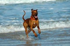 собака счастливая стоковое фото