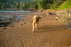 Собака счастья с заходом солнца Стоковая Фотография