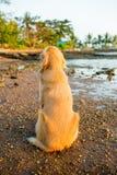 Собака счастья с заходом солнца Стоковое фото RF
