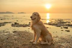 Собака счастья с заходом солнца Стоковое Фото
