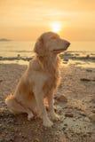 Собака счастья с заходом солнца Стоковое Изображение RF