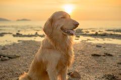 Собака счастья с заходом солнца Стоковые Фотографии RF