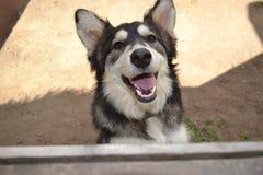 собака 2 счастливая Стоковые Изображения RF