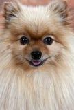 собака счастливая Стоковые Изображения