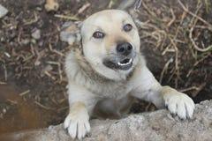 собака счастливая Стоковая Фотография
