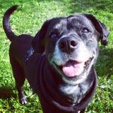 собака счастливая стоковое изображение