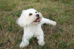 собака счастливая Стоковое фото RF