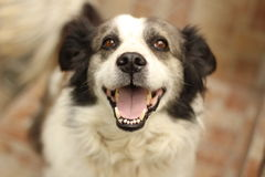 собака счастливая стоковые фотографии rf