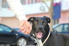 собака счастливая Стоковые Фото