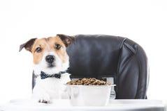 Собака с бабочкой есть еду от шара Стоковое фото RF