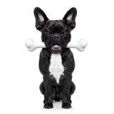 Собака с большой косточкой Стоковое Фото