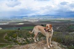 Собака с взглядом вершины холма Стоковое фото RF