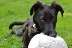 Собака сдерживая шарик Стоковые Изображения