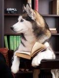 Собака с книгой стоковые фотографии rf