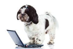 Собака с компьютером на белой предпосылке Стоковые Изображения RF