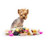 Собака с пилюльками Стоковое Изображение