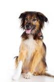 Собака с повязкой с лапкой стоковое изображение