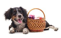 Собака с подарки в корзине стоковые изображения rf