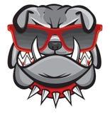 Собака с ретро стеклами Стоковое Фото