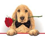 Собака с Розой в его рте Стоковая Фотография RF