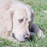 Собака с ручкой Стоковые Фотографии RF