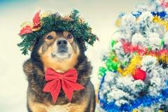 Собака с украшениями рождества сидит рядом с рождественской елкой стоковые изображения