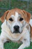 Собака с душой Стоковое Изображение