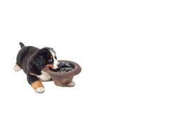 Собака с шлемом Стоковое Изображение RF
