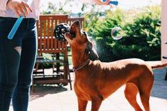 собака с Стоковые Фото