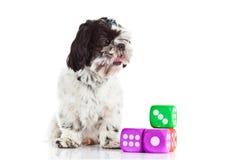 Собака с dices изолированный на белой предпосылке Стоковое Изображение