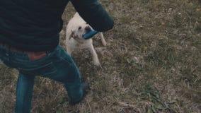 Собака с Frisbee видеоматериал
