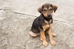 Собака Таиланда Стоковая Фотография