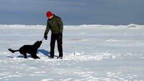 собака твердолобая Стоковая Фотография RF