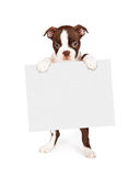 Собака терьера Брайна Бостона держа пустой знак стоковые изображения rf