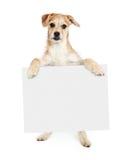 Собака терьера стоя держащ пустой знак стоковое изображение